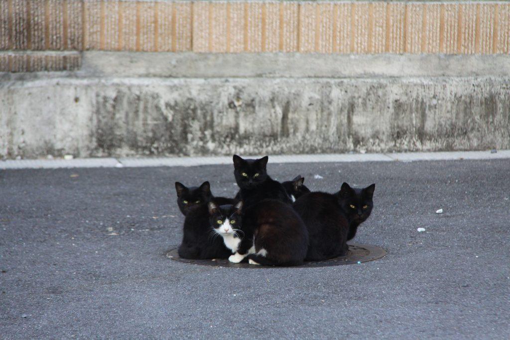 「ねこだんご」撮影:平野芳弘 「別府路地裏猫・ねこ・ネコ写真展」出品
